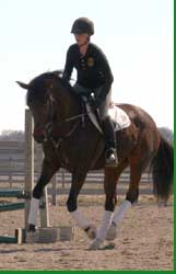 Trakehner filly for sale, Tanzbrise