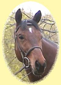 Trakehner gelding Tarythmic
