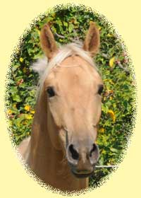 Thoroughbred-Trakehner Foal